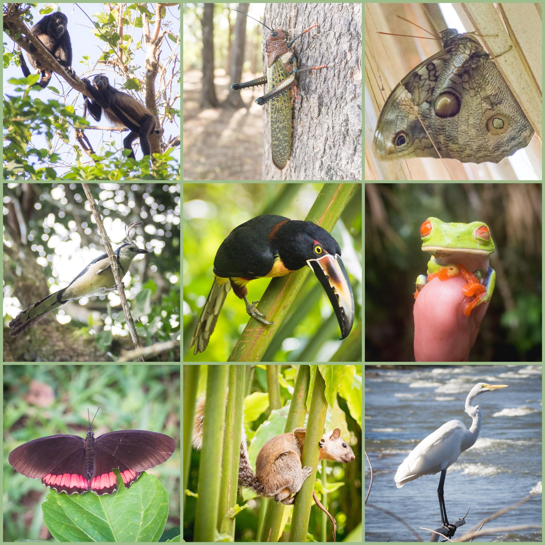 Animaux Costa Rica et Nicaragua   (1)