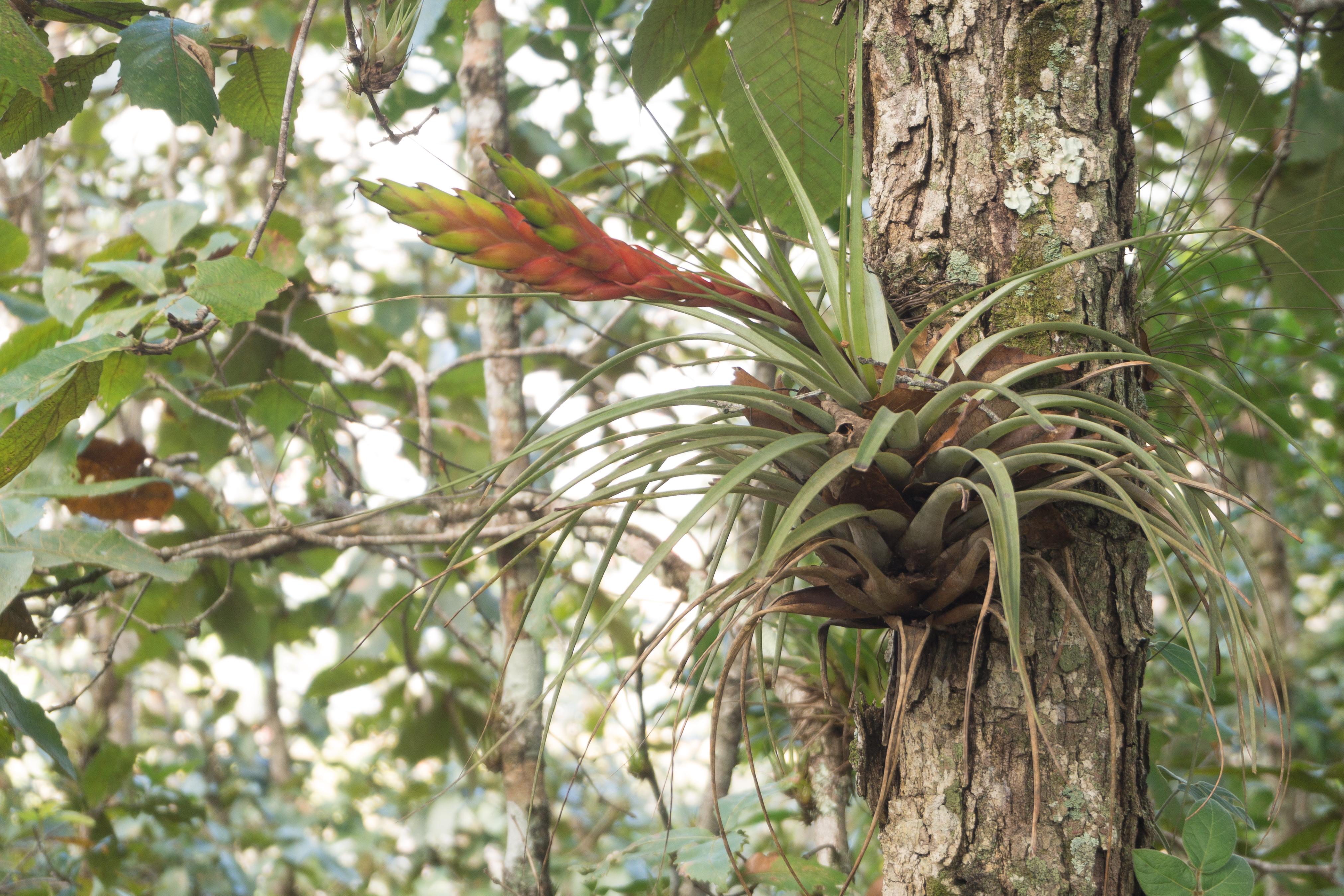 Photos_végétation_et_paysages_Costa_Rica_et_Nicaragua_(80_sur_137)