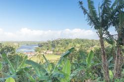 Photos_végétation_et_paysages_Costa_Rica_et_Nicaragua_(90_sur_137)