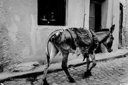 Abyssinie_Harar_Couleurs_signée-24