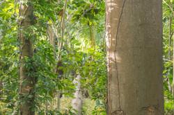 Photos_végétation_et_paysages_Costa_Rica_et_Nicaragua_(14_sur_114)