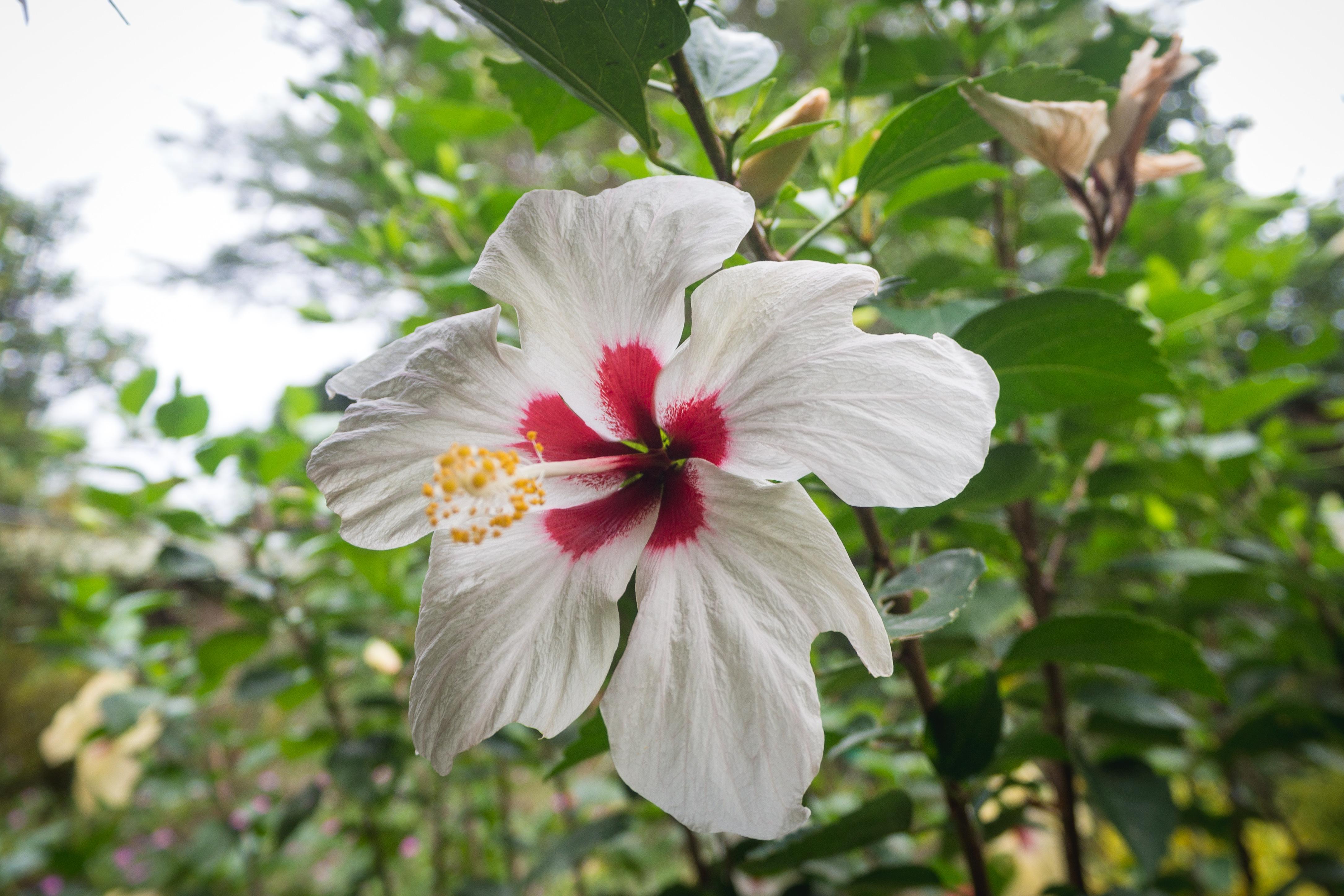 Photos_végétation_et_paysages_Costa_Rica_et_Nicaragua_(28_sur_137)