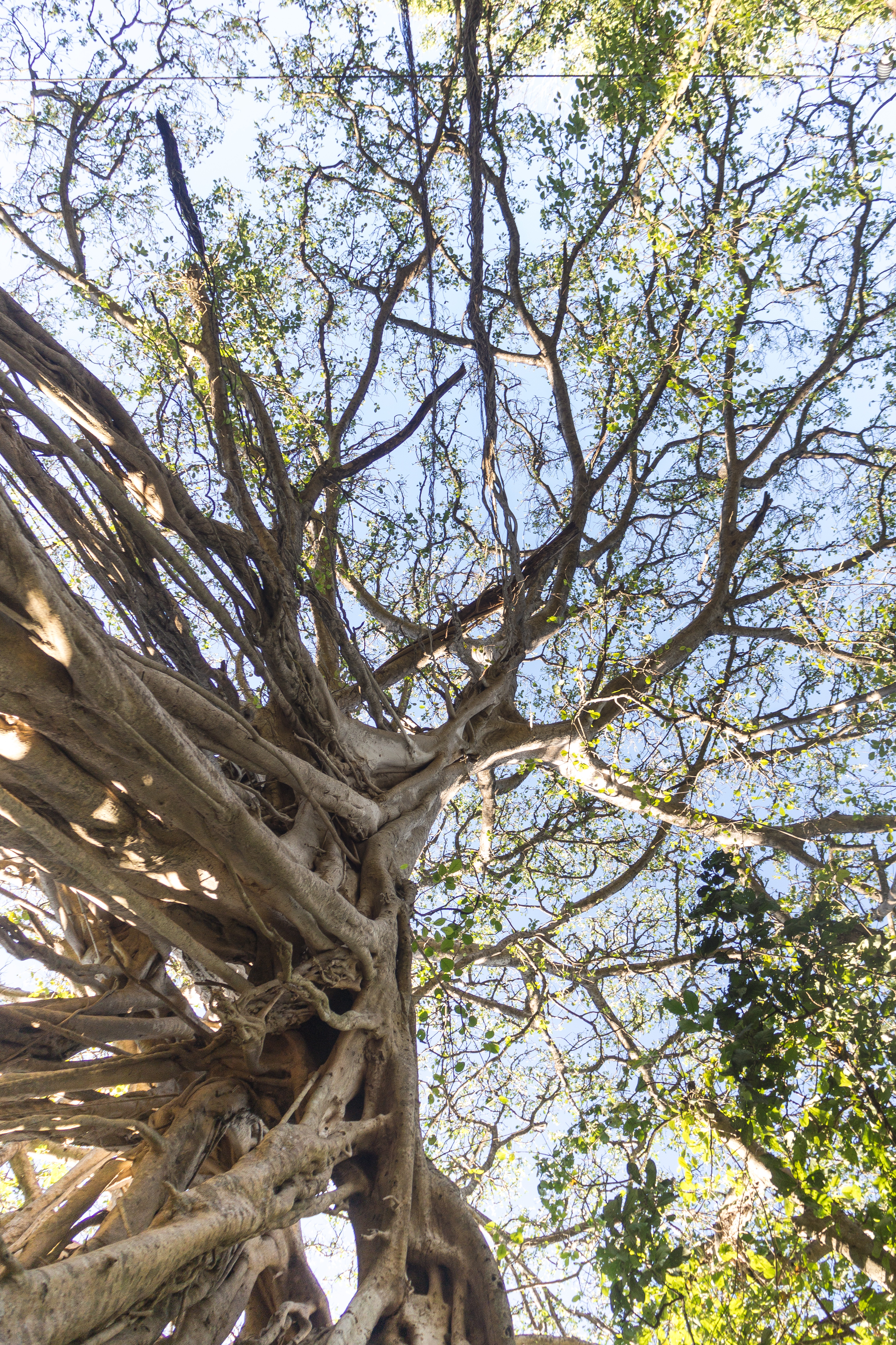 Photos_végétation_et_paysages_Costa_Rica_et_Nicaragua_(38_sur_137)