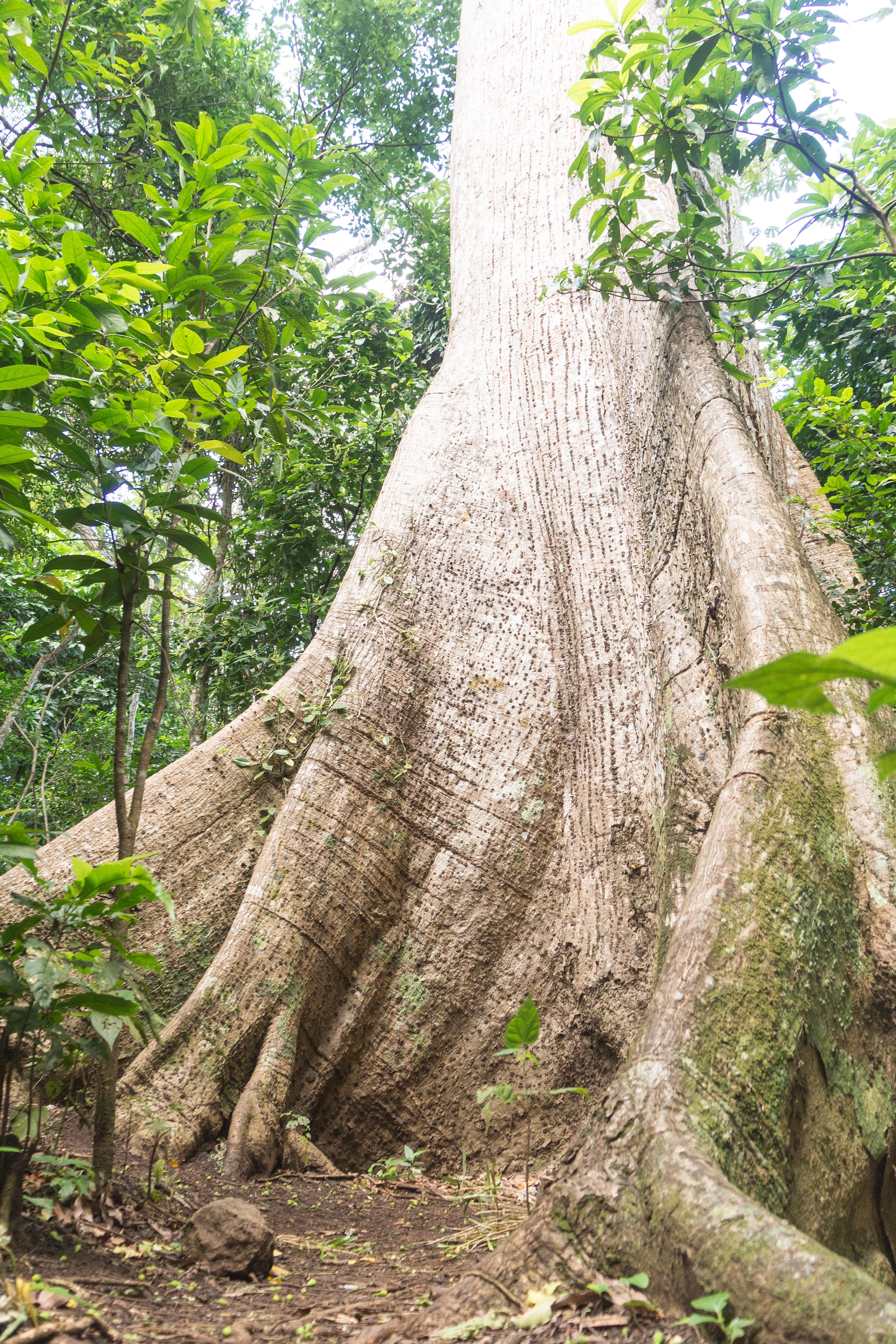 Photos_végétation_et_paysages_Costa_Rica_et_Nicaragua_(28_sur_114)
