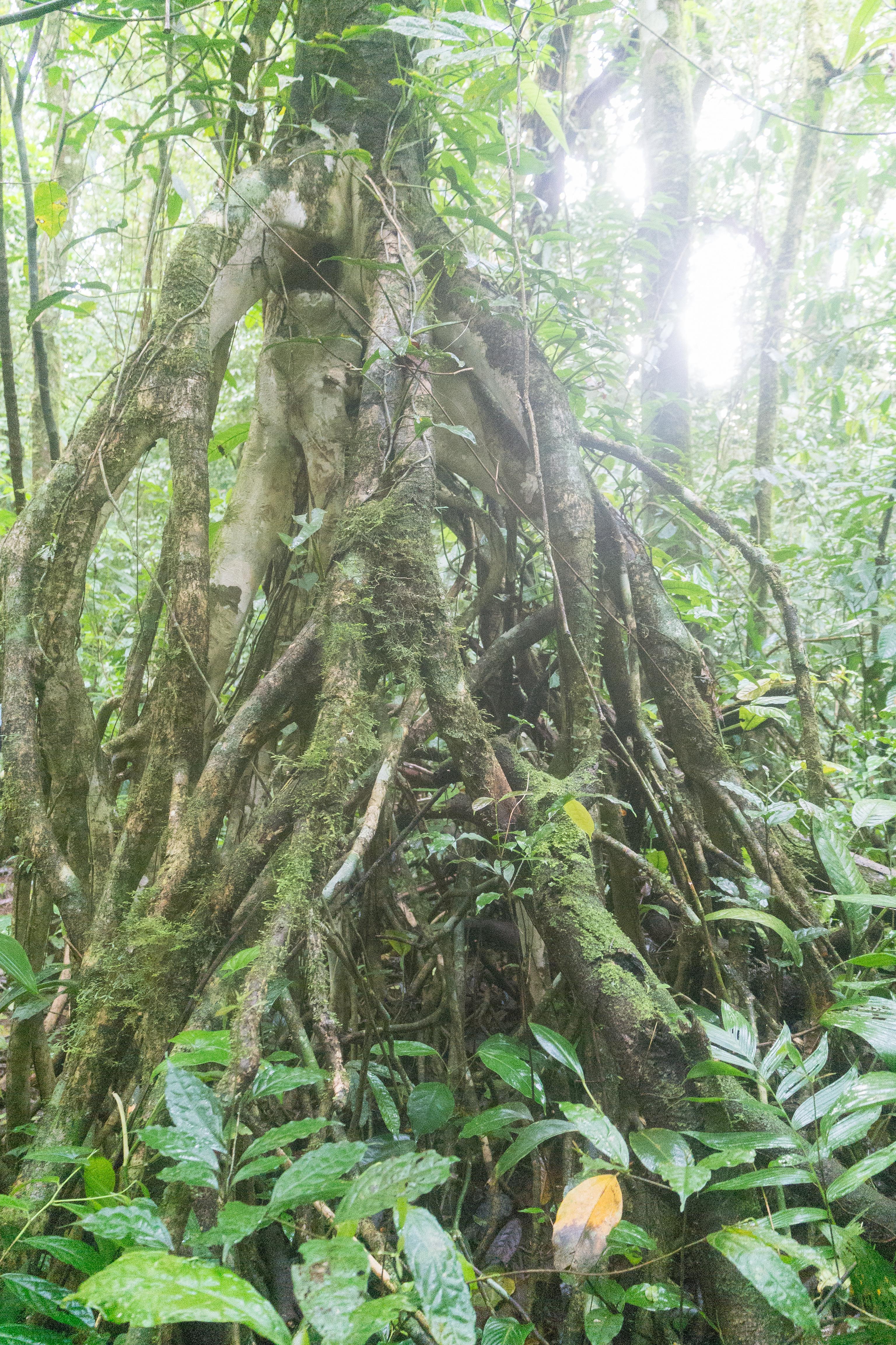 Photos_végétation_et_paysages_Costa_Rica_et_Nicaragua_(127_sur_137)