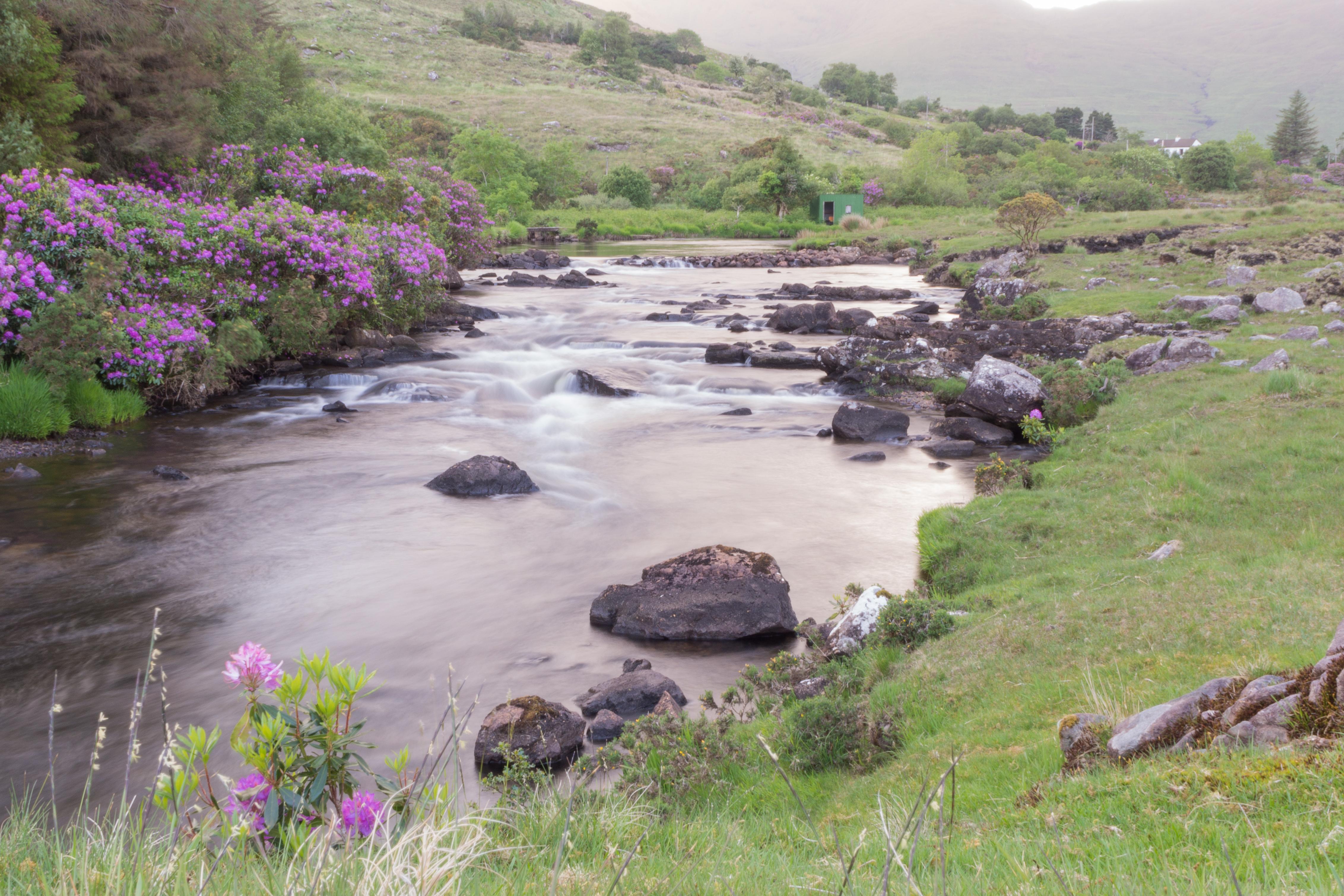 Irlande - Connemara -  mai 2017-175