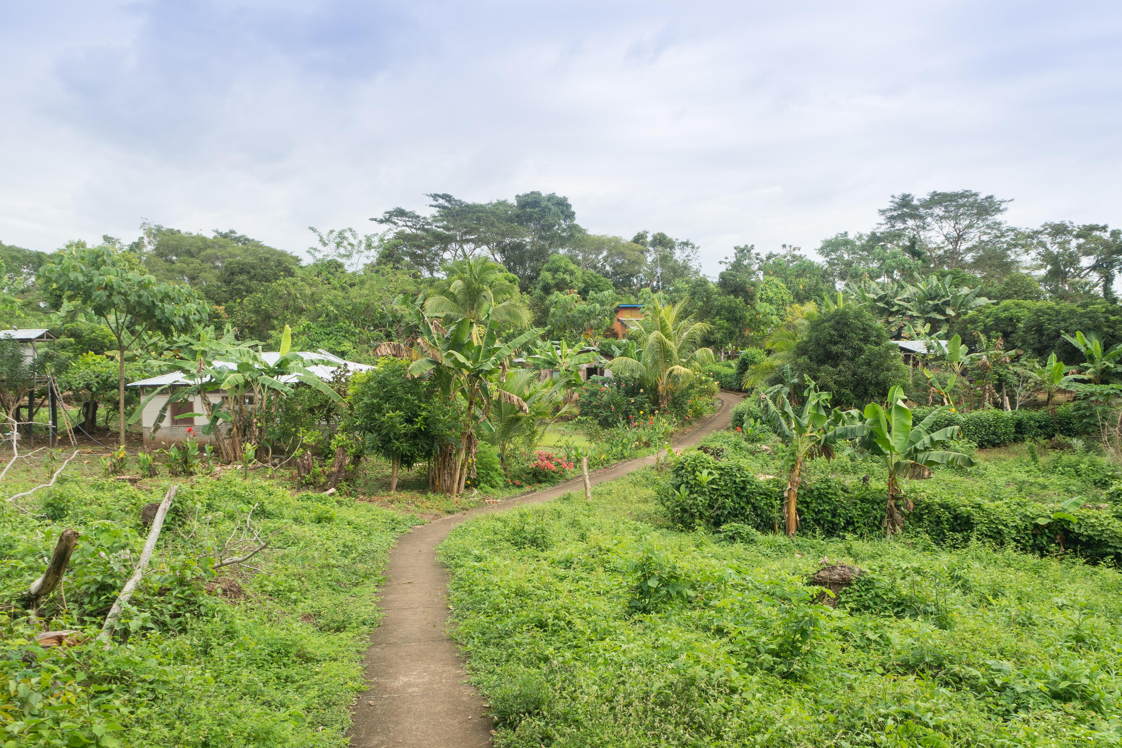 Photos_végétation_et_paysages_Costa_Rica_et_Nicaragua_(15_sur_137)