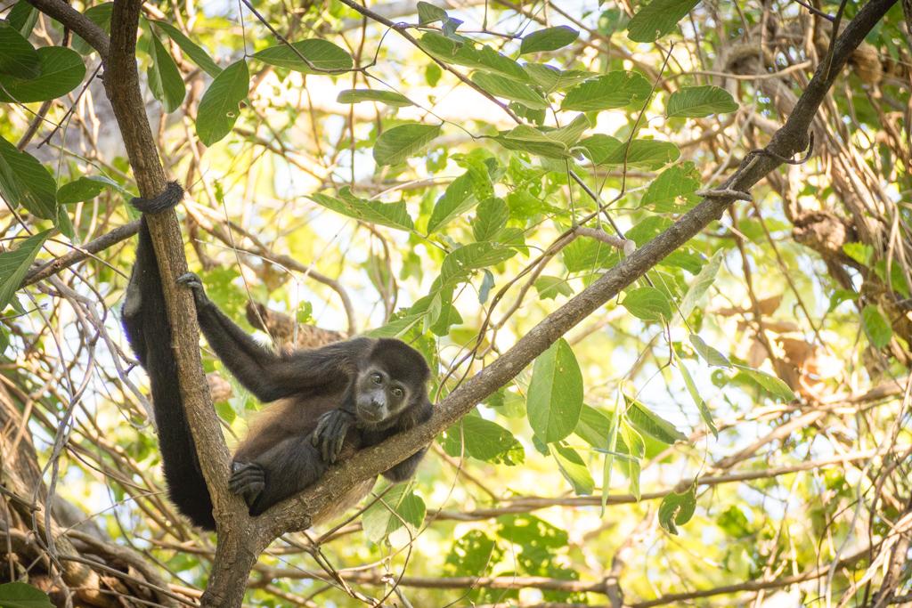 Animaux Costa Rica et Nicaragua   (21)