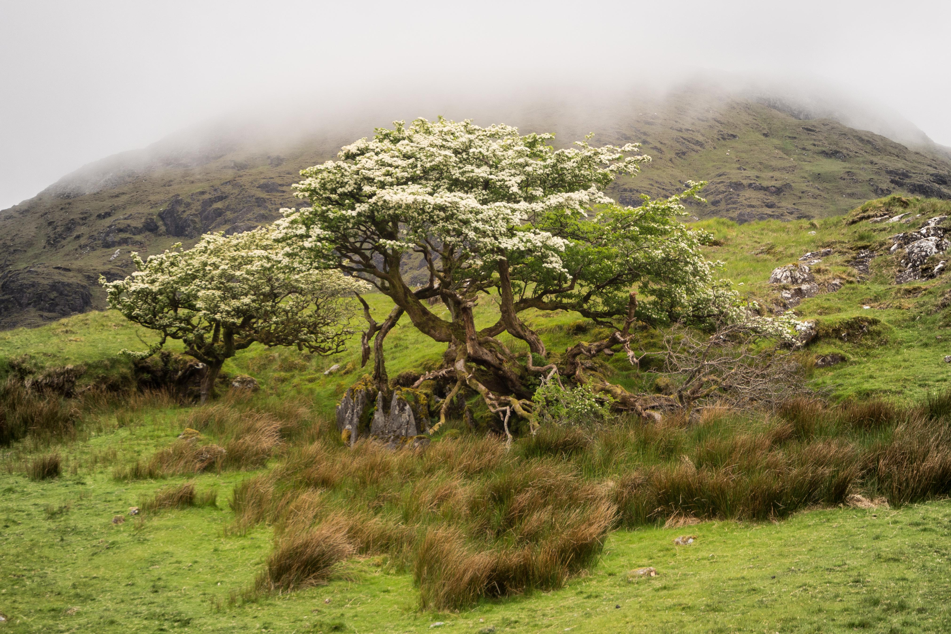Irlande - Connemara -  mai 2017-66