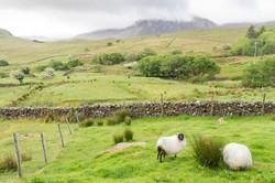Irlande - Connemara -  mai 2017-49