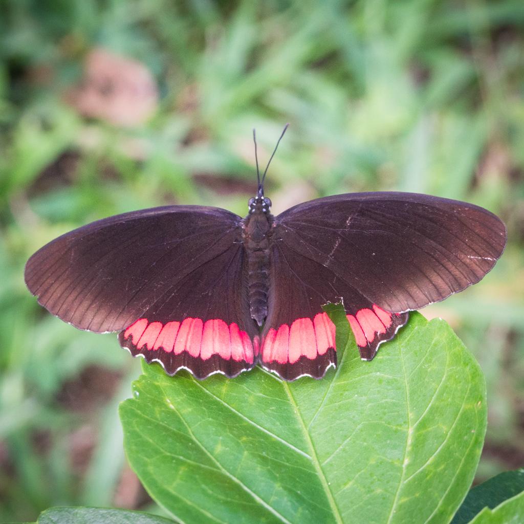 Animaux Costa Rica et Nicaragua   (35)
