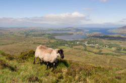 Irlande - Connemara -  mai 2017-123