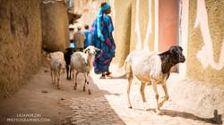 Abyssinie_Harar_Couleurs_signée-28