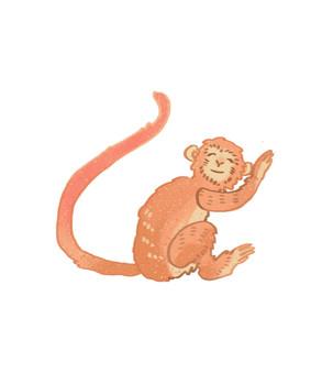 猴.jpg