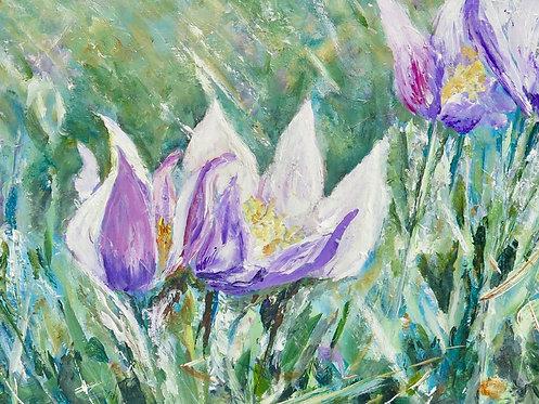 29 Irises