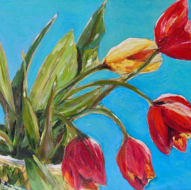 Tulips Doris Wilson