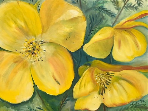 13 Poppies by Kate Brown