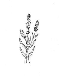 Lavender wall art, botanical flower illustration, minimalist print, relaxation, floral, li
