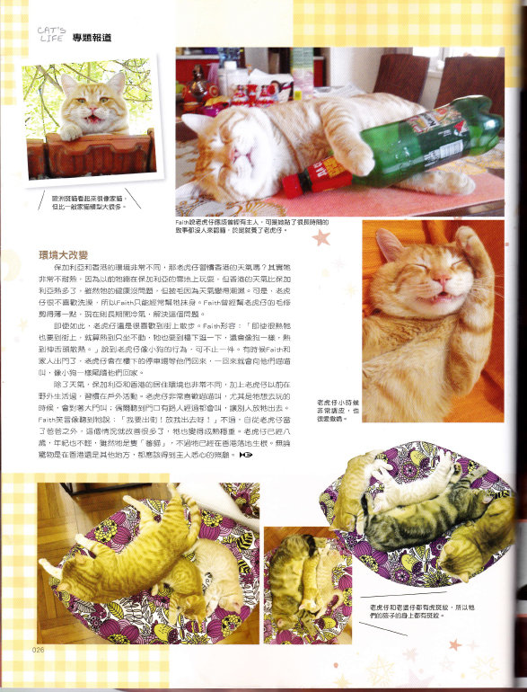201811 Cat_s Life 老虎仔訪問-6.jpg