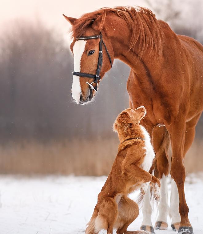 pferd+hund.png