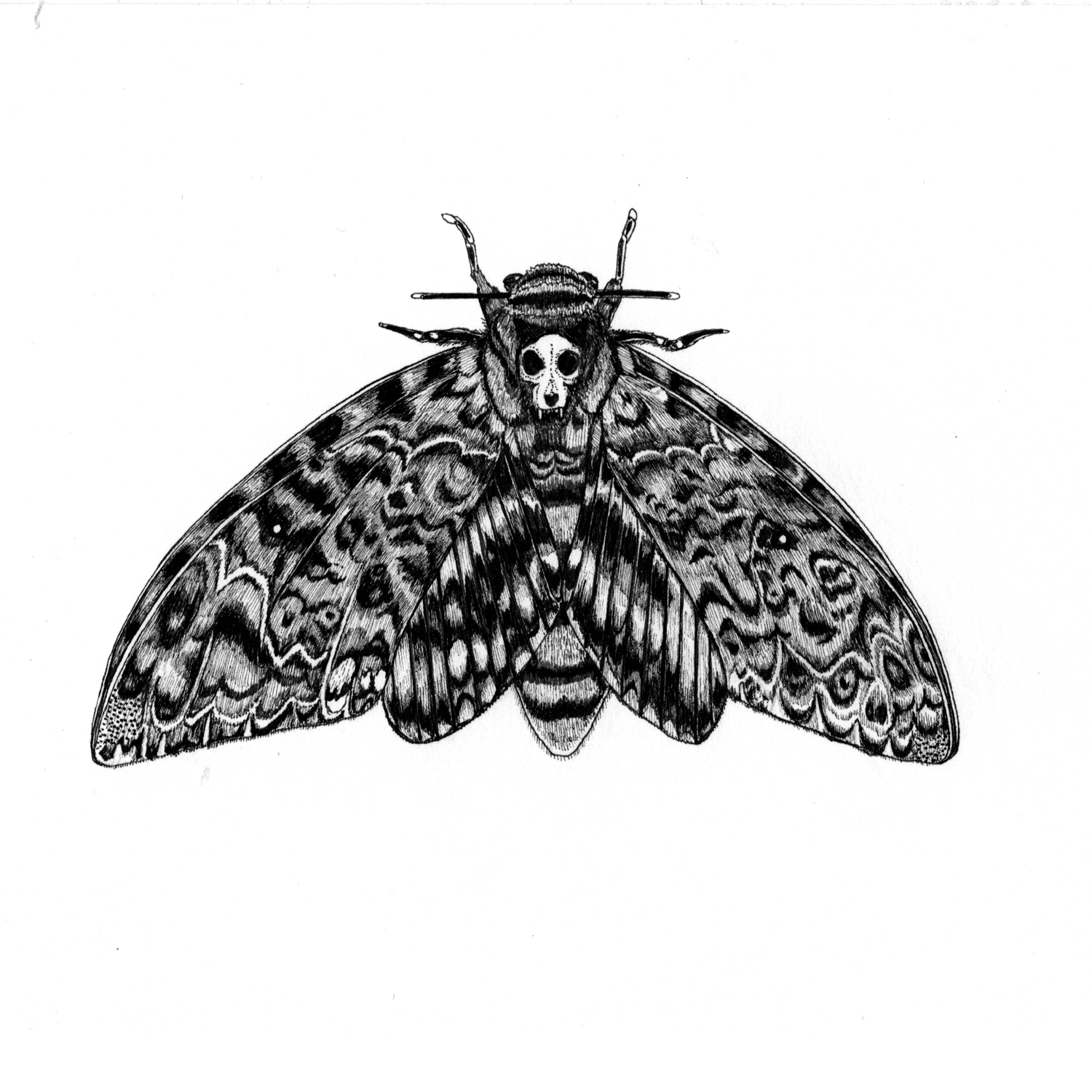 Death's Head Moth with Cat Skull
