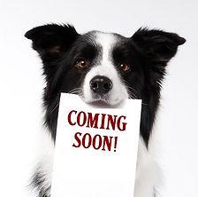 DogComingSoon-1.jpg