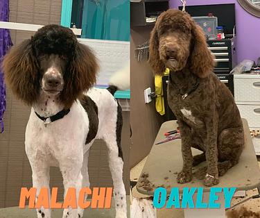 Malachi & Oakley.png