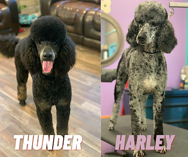 Copy of Copy of Copy of Copy of Thunder.