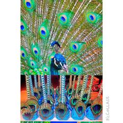Peacock Cakepops