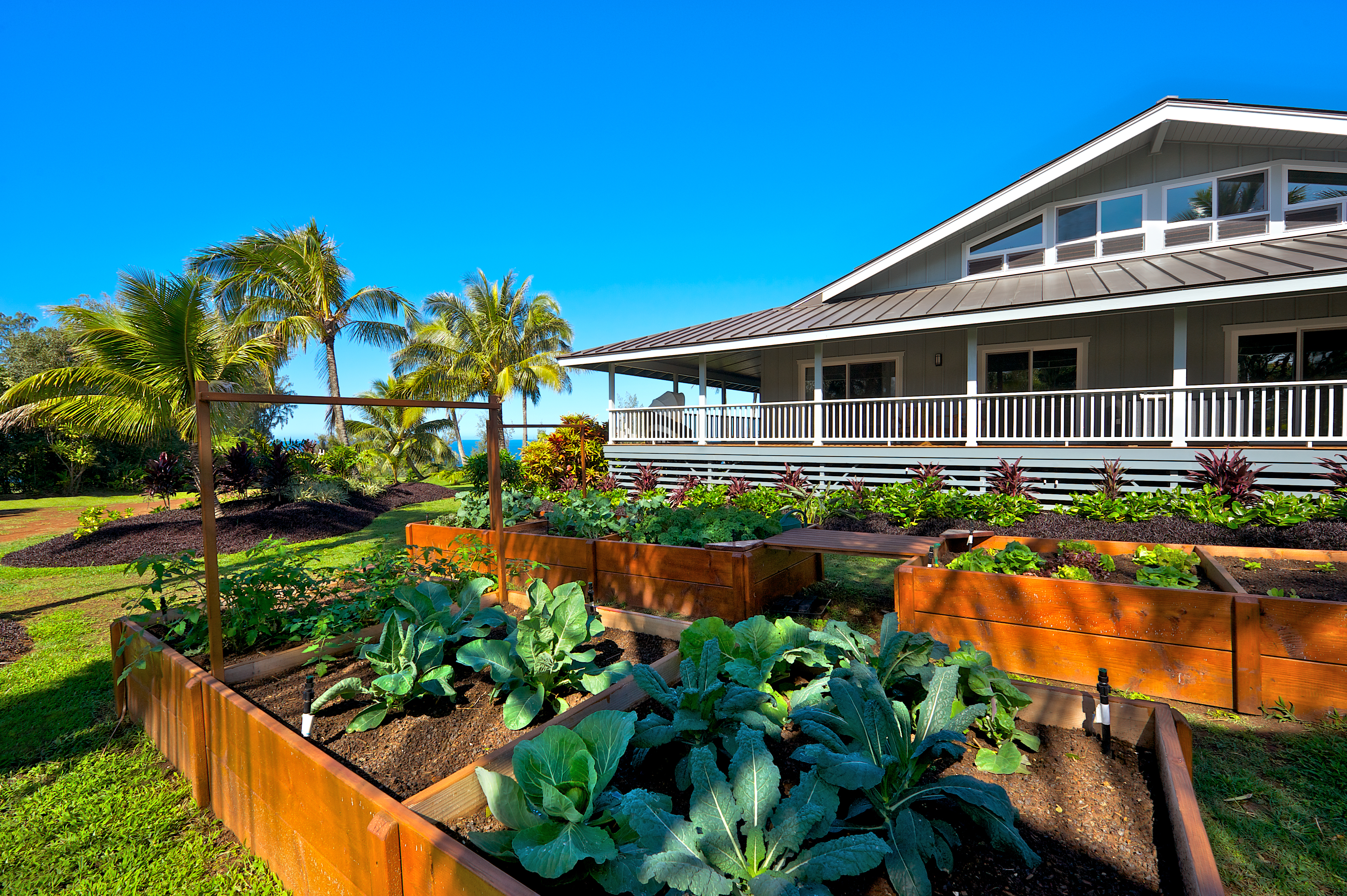 Outdoors 3 - Veggie Garden