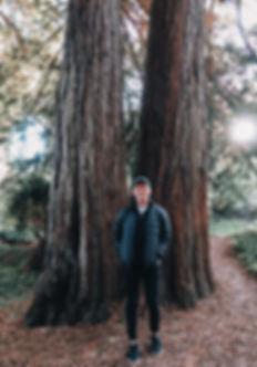 dec18-redwoods-5.jpg