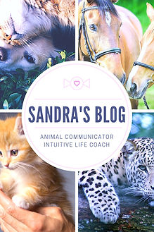 sandra's%20blog_edited.jpg