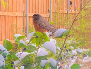 Robin Invasion