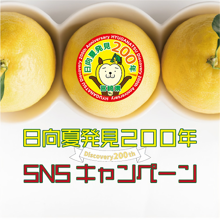 「日向夏発見200年」SNSキャンペーン!実施中