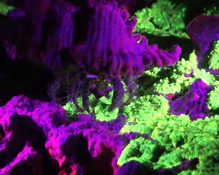 plongée fluorescente