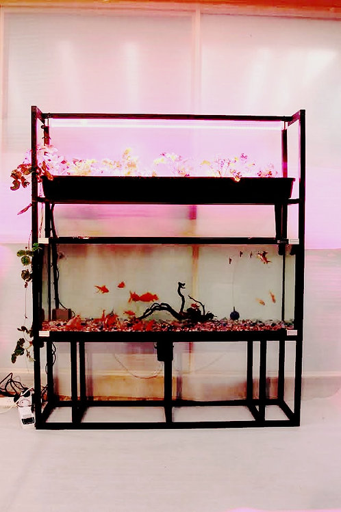 Custom Designed Aquaponic system.                     From