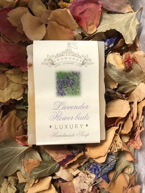 Lavender Flowers Buds