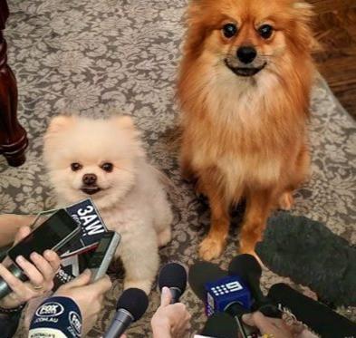 Covid Press Conference