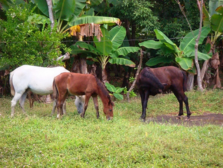 Investing in real estate in NIcaragua