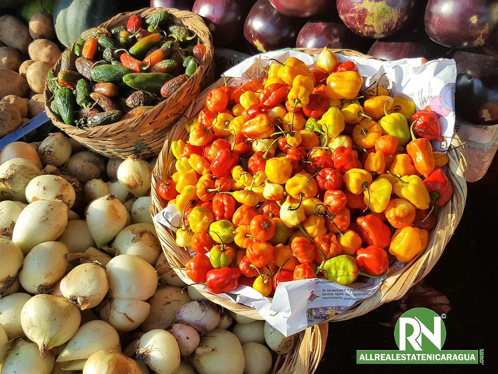 farmer market masaya nicaragua