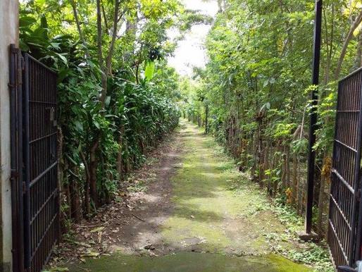 Diria Farm