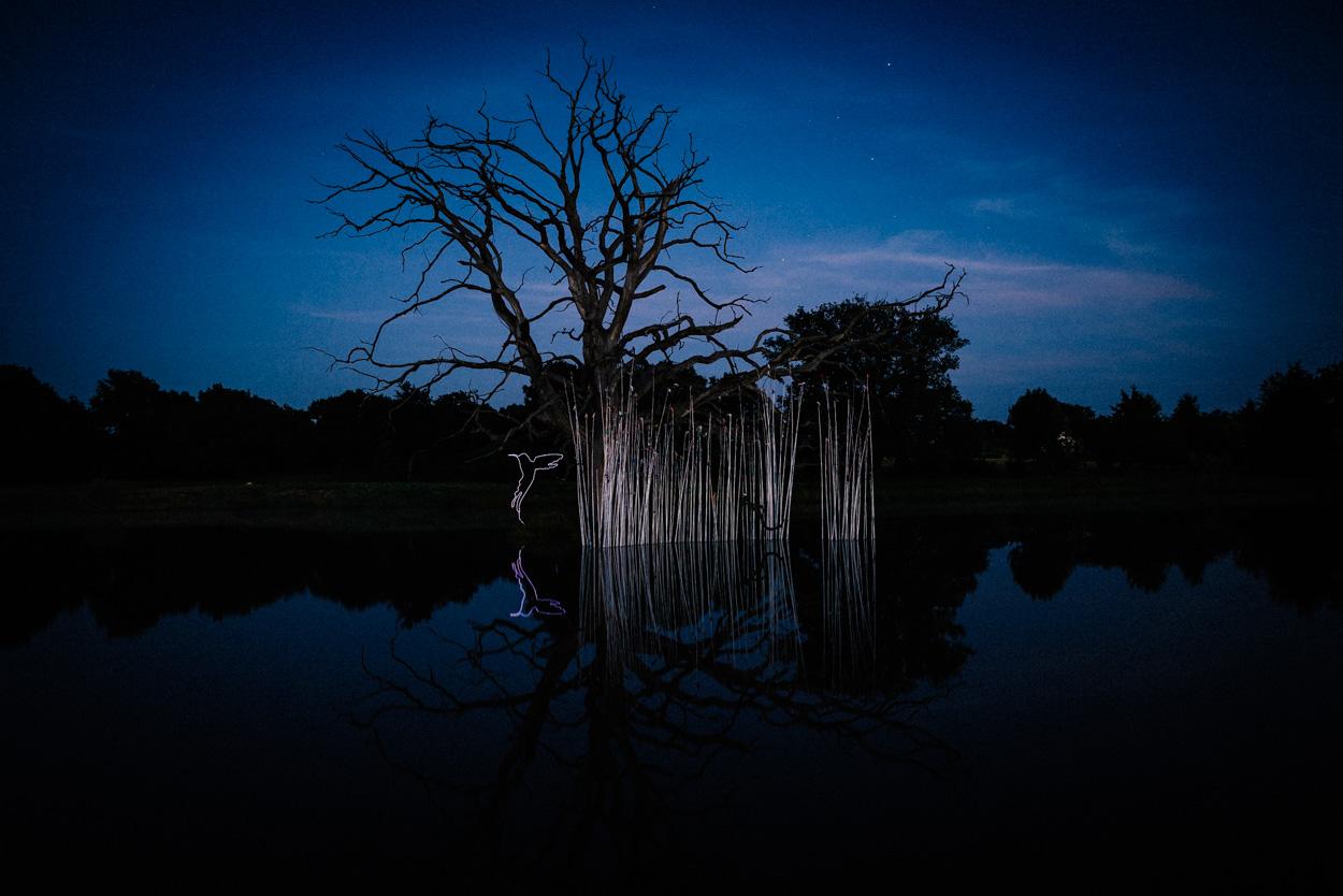 colibri de nuit