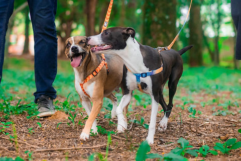 Niko Dogs-02421.jpg