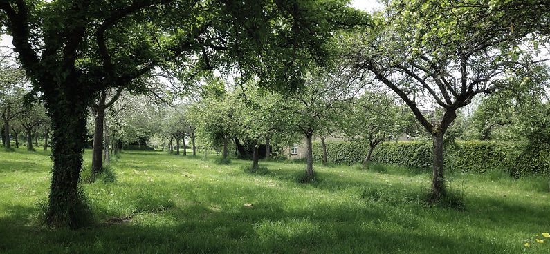 perrys-orchard.jpeg