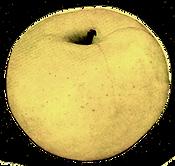 green yelow apple botanical CROPPED.png