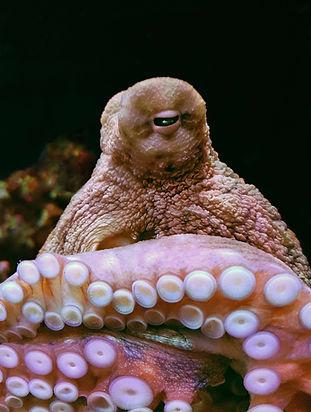 Octopus_small.jpg