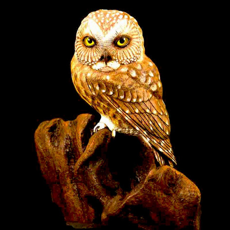 Saw Whet Owl by Phil Terry