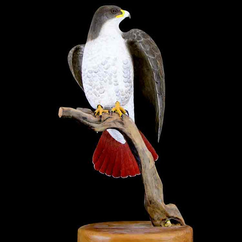 Red Tail Hawl by Jerry Sanderson