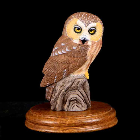 Saw Whet Owl by Ray Stansel
