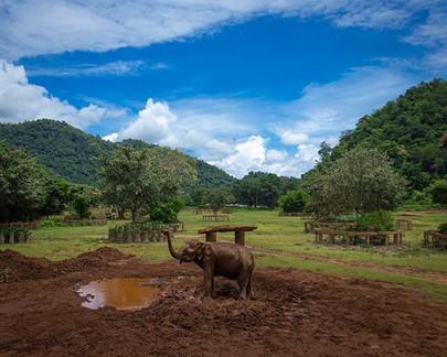 Save the Elephants . . .  An elephant ta
